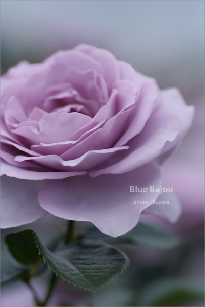 Blue-Bajou.jpg