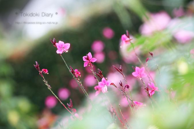 ちっちゃなピンク花sonet.jpg