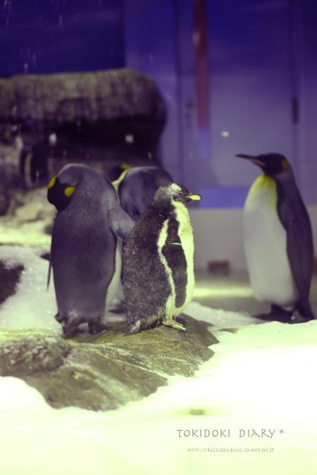 ペンギンsonet.jpg