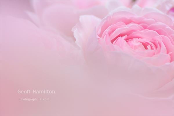 Geoff_Hamilton.jpg