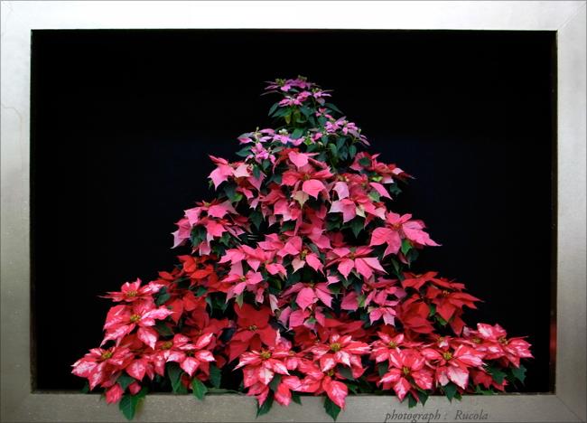 christmas_9.jpg
