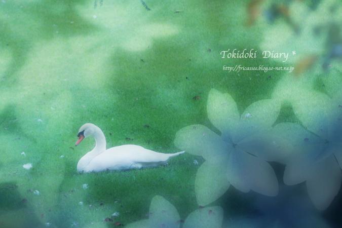 swan-ss.jpg
